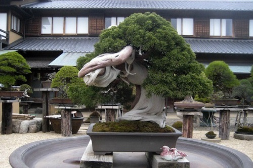 enterijer-moj-vrt-bonsai-drvo (5)